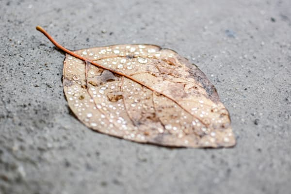 A Leaf vs The Pavement