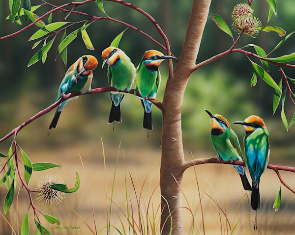 A Colourful Life - Rainbow Bee-eaters - Australian Native Wildlife