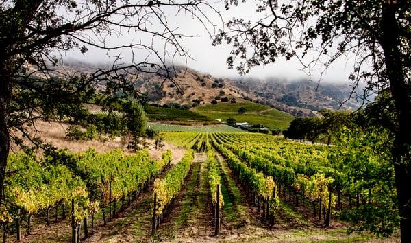 Napa-Valley-Vineyard