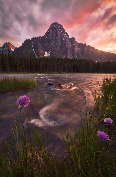 'Wild Spice & Wild Chives' Photograph by Jess Santos for sale as Fine Art