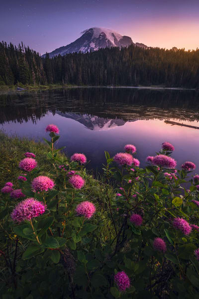 'Rosy Blooms & Alpine Glow' Photograph for sale as Fine Art