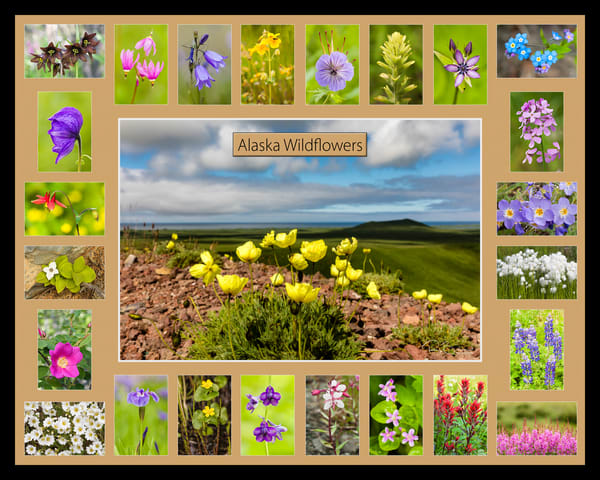 Poster of Alaska Wildflowers