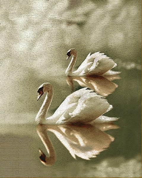 """Swans"" Art 