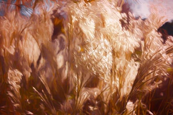 Fall Grasses Art | monroepayne