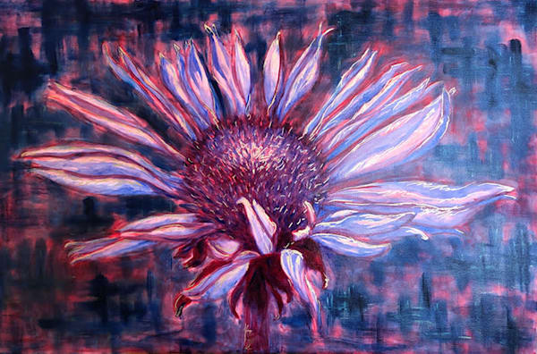 Cone Flower In Bloom Art | RPAC Gallery