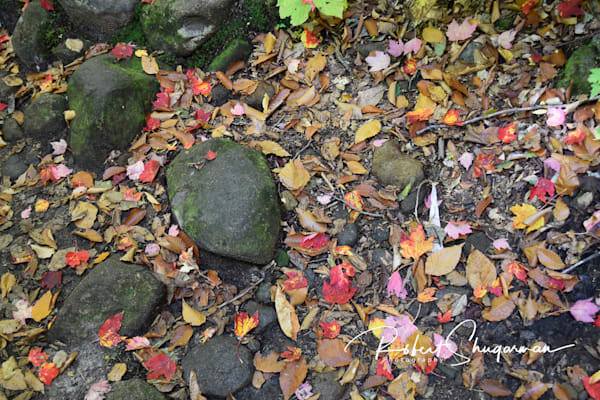 Fall Leaves and Rocks | Shop Prints | Robert Shugarman Photography