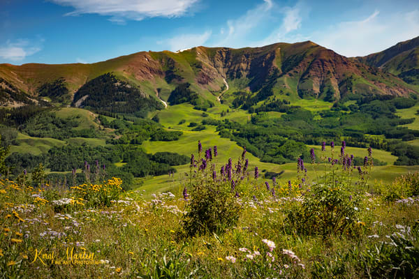 Wildflowers and Mountains along Snodgrass Trail Photograph  6734 | Colorado Photograph | Koral Martin Fine Art Photography