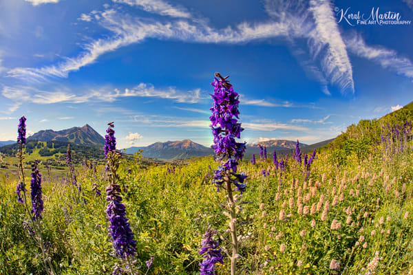 Wildflowers Mountains Snodgrass Trail 6753 Art | Koral Martin Fine Art Photography