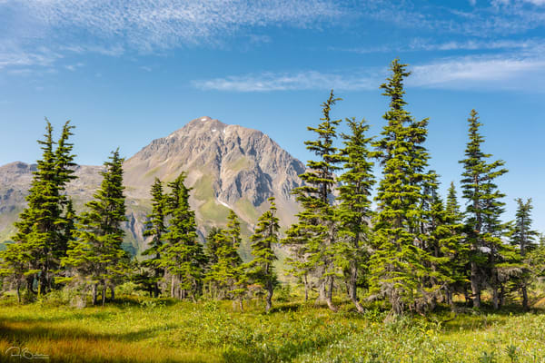 Spruce trees and Resurrection Peaks along the Lost Lake trail in Southcentral Alaska. Summer. Morning.