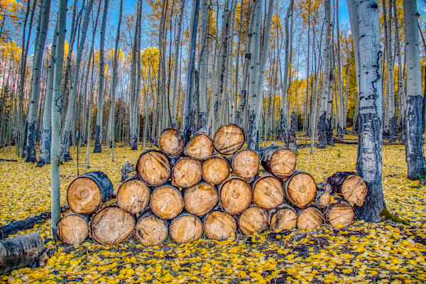 Logs In The Fall Photography Art | Peter Batty Photography