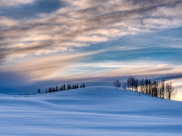 Trees On A Snowy Skyline Photography Art | Peter Batty Photography