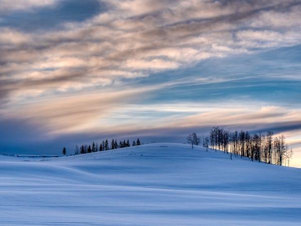 Trees On A Snowy Skyline Photography Art | Peter Batty Photography