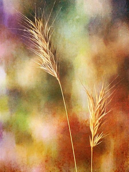 Dried Plants on Canvas Fine Art Print
