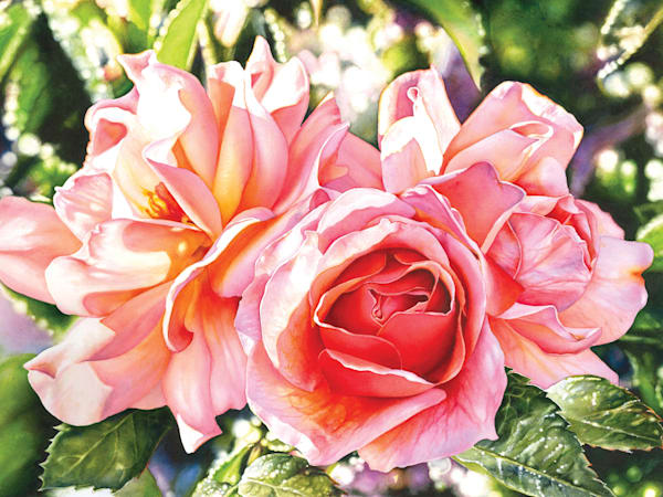 Rose #3 watercolor painting