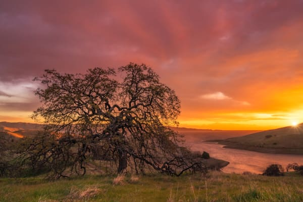 'Oak & River' Photograph by Jess Santos for sale as Fine Art
