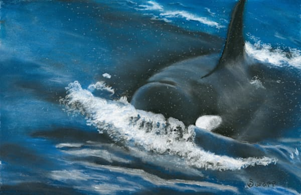Susan Swapp - Orca Approach