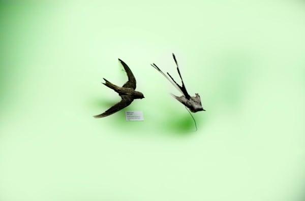 Birds Art | karlherber
