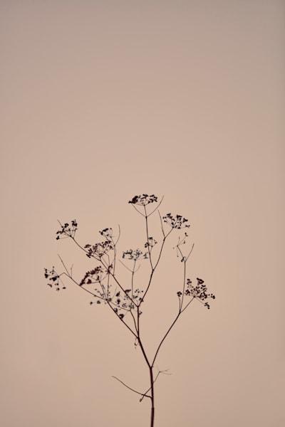 Botanical Art | karlherber