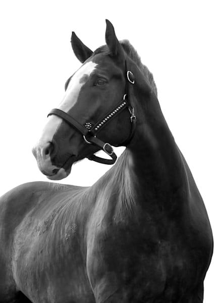 Draft Horse Art | karlherber