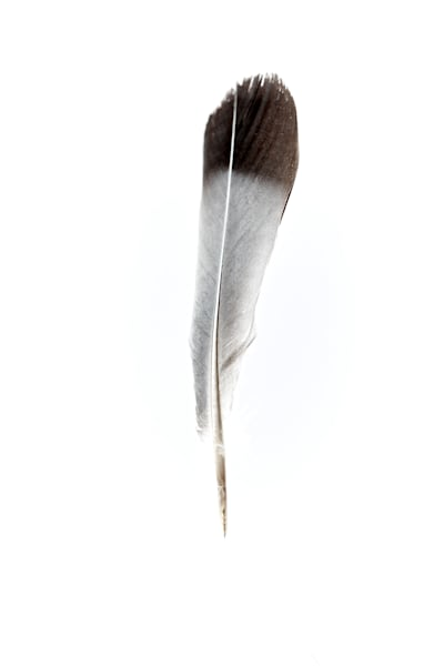 Feather Art | karlherber
