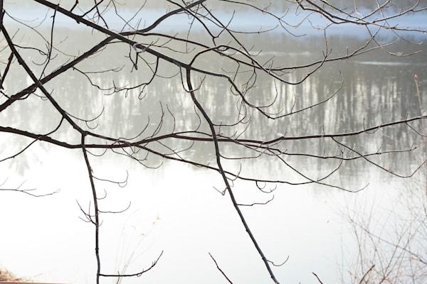 Flambeau Branches Art | karlherber