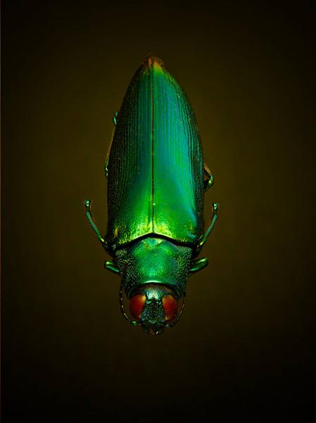 Green Bug Art | karlherber