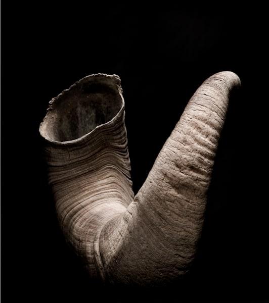 Horn Art | karlherber