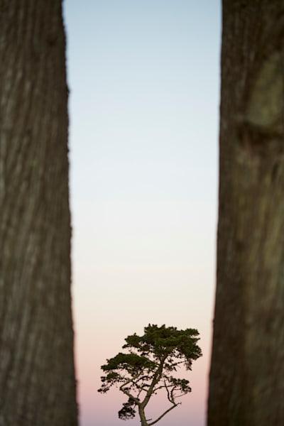Lands End Trees Art | karlherber