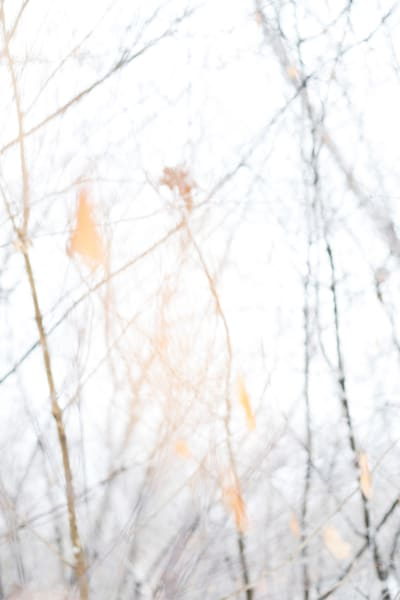 Orange Leaf Art | karlherber