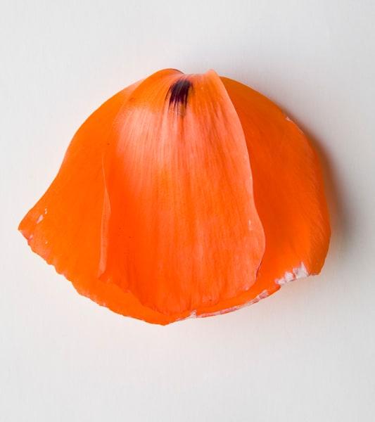 Poppy Art | karlherber