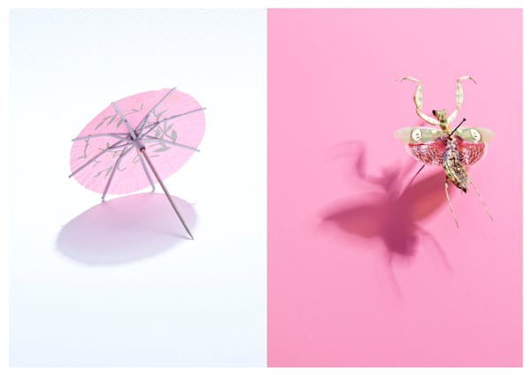 Umbrella Bug Art | karlherber