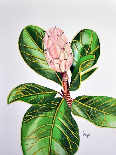 A painting of a Magnolia fruit by Sanibel artist Shah Hadjebi