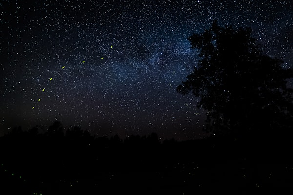 Night Photography of Stars and Fireflies | Nathan Larson Photography