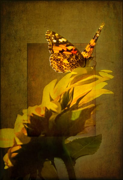 The Alluring Butterfly