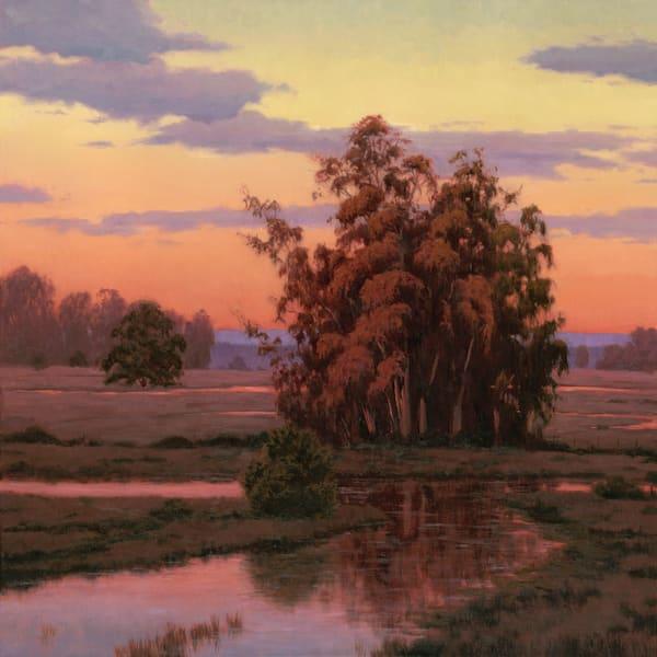 Wetland Sunset Eucalyptus Tree print