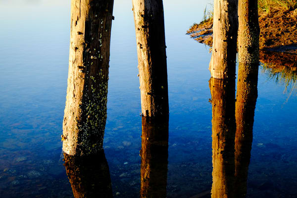 Morning Light & Dock Pilings print | Richard Crable Fine Art Photography