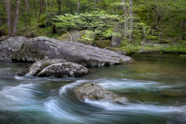River of Life | Dogwoods in full bloom in Great Smoky Mountains