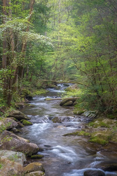 Cooling Off in the Great Smoky Mountains National Park | Fine Art print by Charlotte Gibb