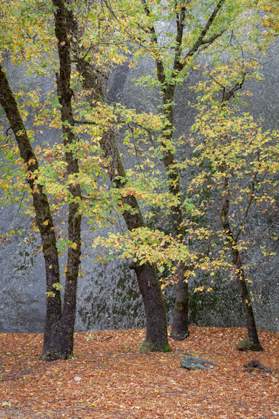 The Gossips — Late Summer | Fine Art in Yosemite