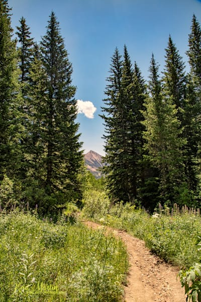 Snodgrass Trail  Photograph 7027 | Colorado Photography | Koral Martin Fine Art Photography