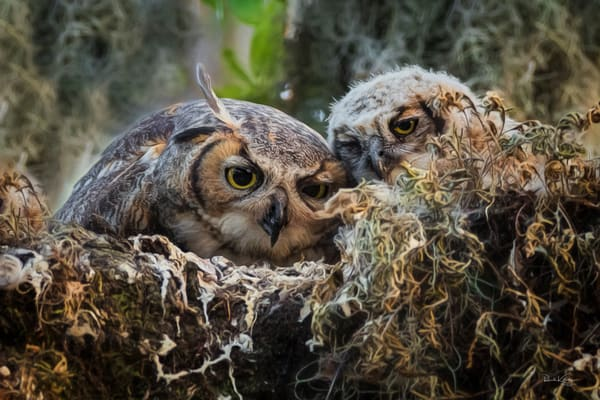 Mother Owl and Owlet