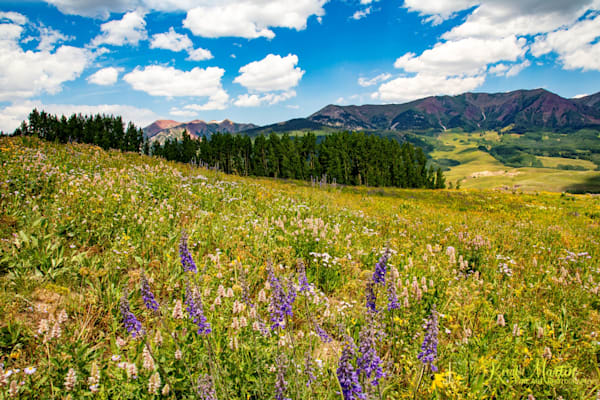 Snodgrass Trail Flowers Mountains Photograph 7111| Colorado Photography | Koral Martin Fine Art Photography