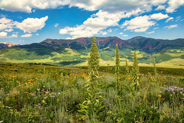 Monument Plant on Snodgrass Trail  Photograph 7123 | Colorado Photography | Koral Martin Fine Art Photography