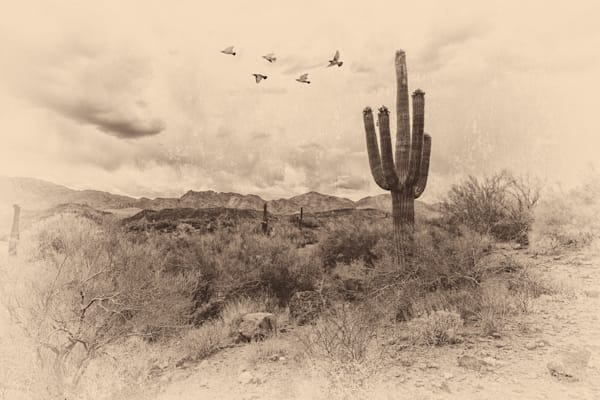 Black Bird Escape in a desert scene featuring Saguaros