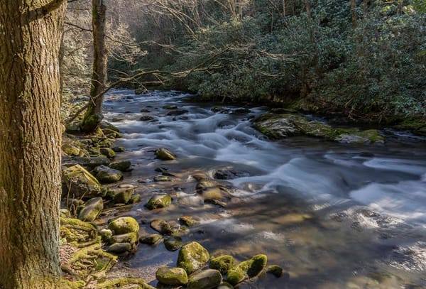 Oconaluftee Creek   Smoky Mountains National Park Art | Drew Campbell Photography