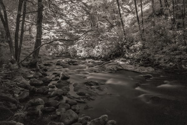 Creek In The Great Smoky Mountains   Infrared Photography Art | Drew Campbell Photography