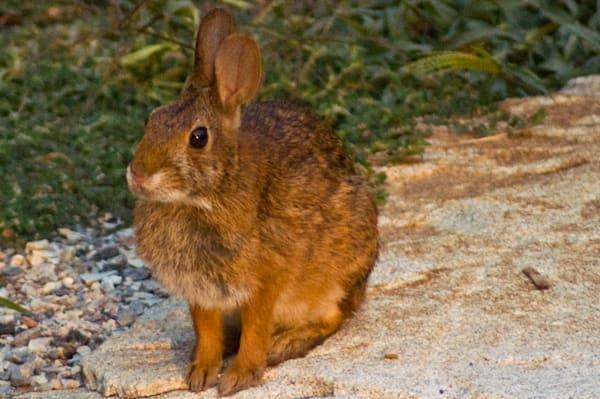 Rabbit Art | Drew Campbell Photography