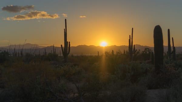 Sunset Through Cactus Art | Drew Campbell Photography