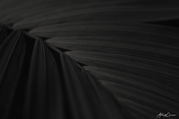 Palm Frond 2