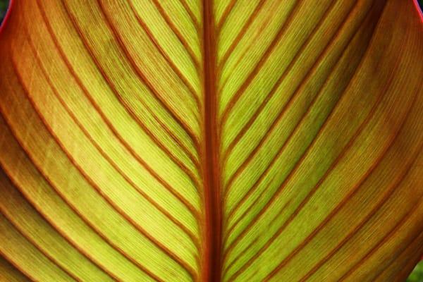 Canna Leaf Art | Moore Design Group